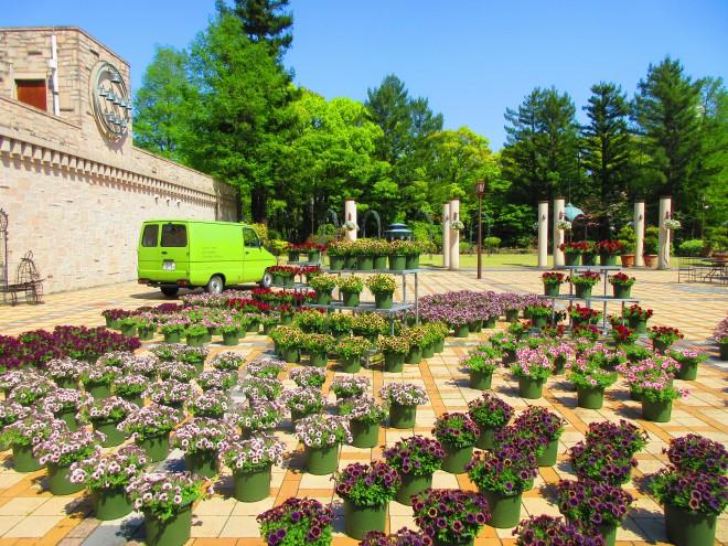 ペチュニアの庭ー1